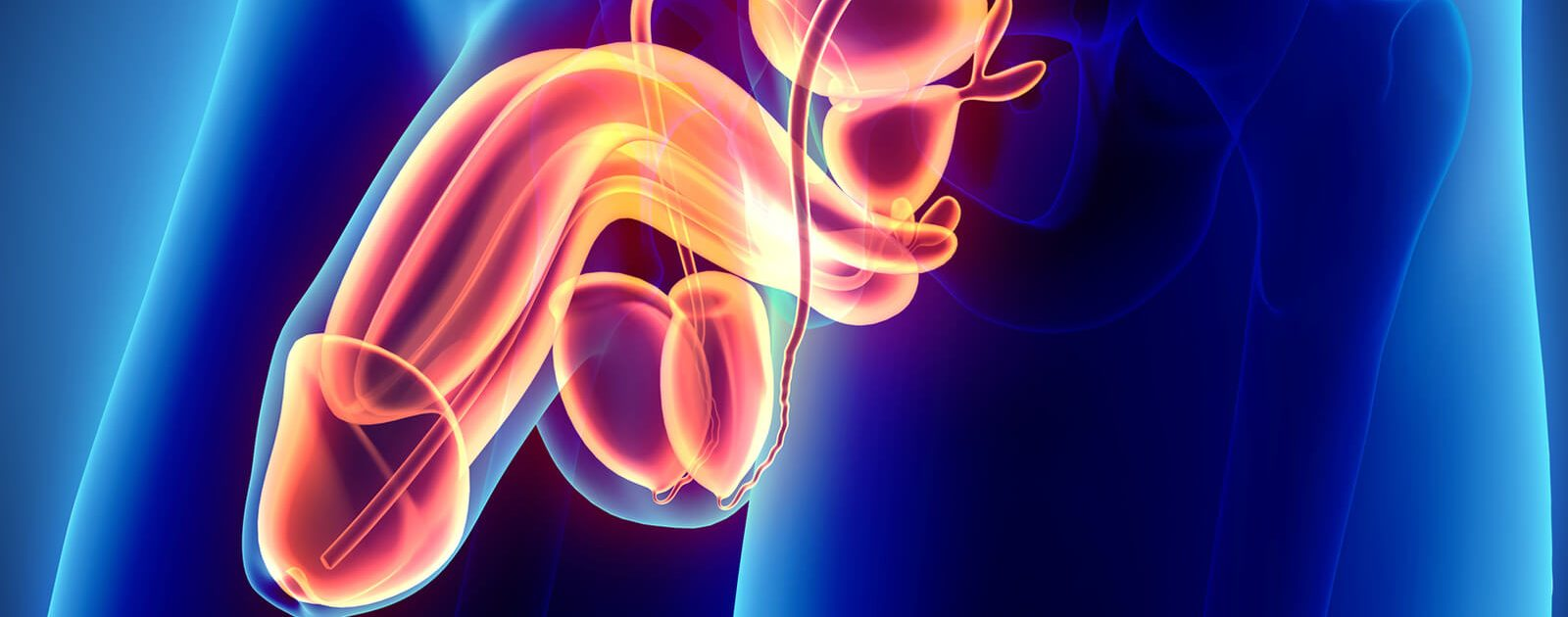 Symbolbild für Penis- und Hodenerkrankungen